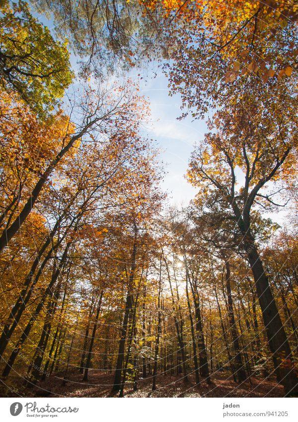 herbstwald. Natur Landschaft Pflanze Himmel Sonne Herbst Baum Park Wald verblüht Wachstum mehrfarbig Warmherzigkeit Vergänglichkeit Blatt Laubbaum Laubwald