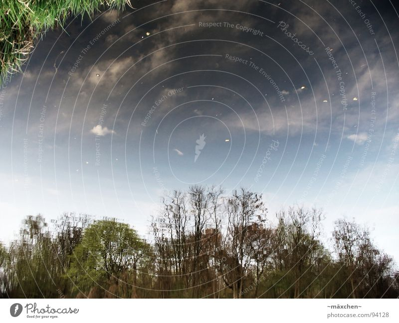 Gras vom Himmel?! Wolken Reflexion & Spiegelung Baum Herbst grün schwarz weiß gelb Sommer entgegengesetzt Wasser sky water dreckig tree leaf autum blau