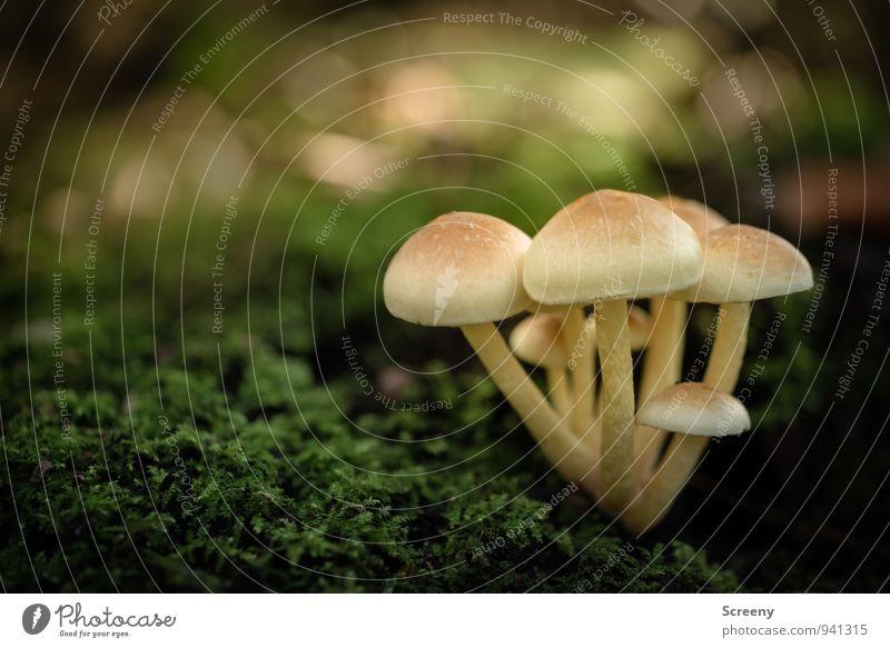 Kleine Bande Natur Pflanze Herbst Pilz Pilzhut Moos Wald Wachstum klein niedlich braun gelb grün Sicherheit Geborgenheit Freundschaft Gelassenheit geduldig