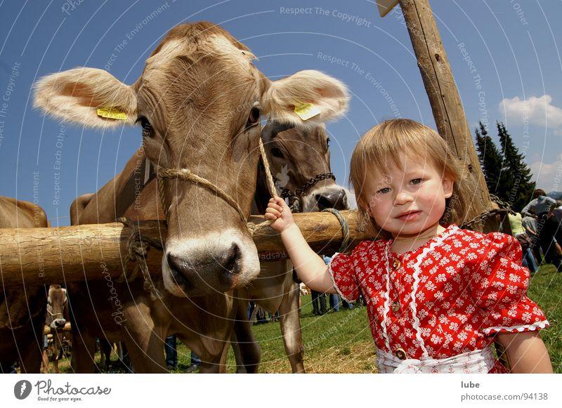 Jungbäuerin Mädchen Kind Landwirtschaft Kuh Kalb Rind Tierzucht