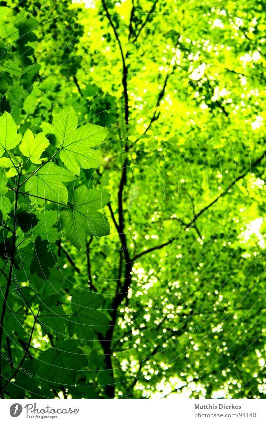 BLATT IM WALD grün schön Sommer Sonne Baum Blatt dunkel Wald Beleuchtung Wege & Pfade Freiheit oben hell Regen Luft Wildtier