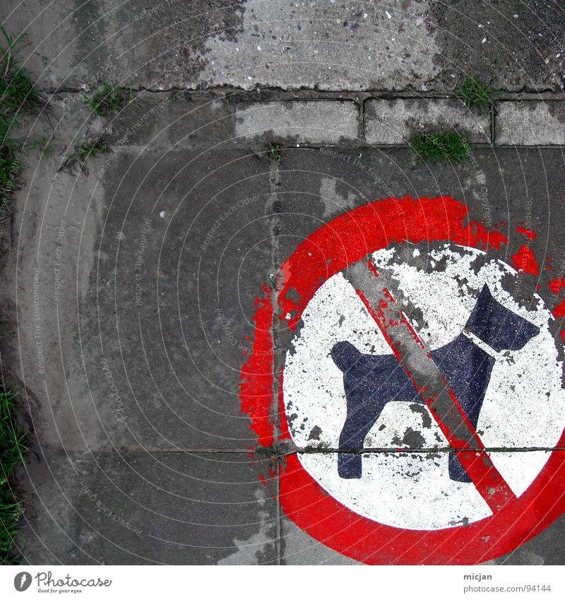 Mein Hund darf das! Verbote verweigern Grenze rot Quadrat durchstreichen weiß kaputt Ecke Symbole & Metaphern Tierfreund Pessimist unten die Erlaubnis haben