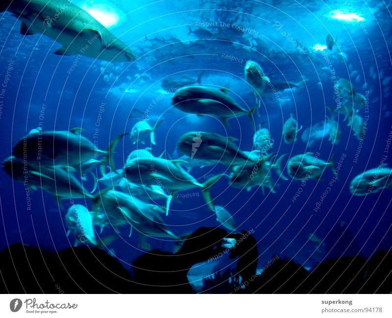 Fish Natur Wasser Meer blau Sommer kalt Gefühle Freiheit Wärme nass Fisch Physik Lebensfreude Flucht Aquarium