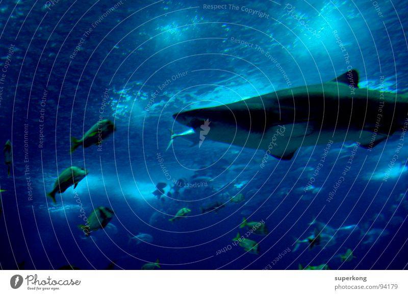 Mobile Imbissstube Fischer Meer Wasser Aquarium Momentaufnahme Tierliebe staunen Gewässer Lachs Haifisch Seeigel Gefühle Überlebenskampf Strömung Präsentation