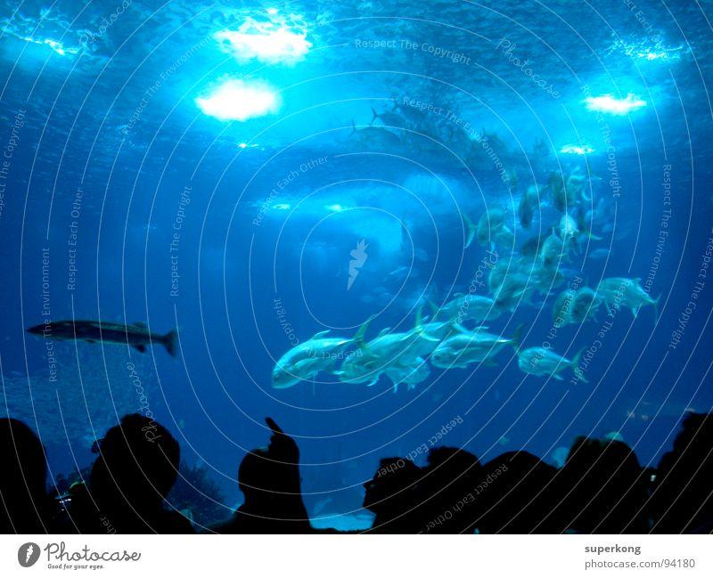 ||| Natur Wasser Meer blau Sommer kalt Gefühle Freiheit Wärme nass Fisch Restaurant Physik Lebensfreude Flucht