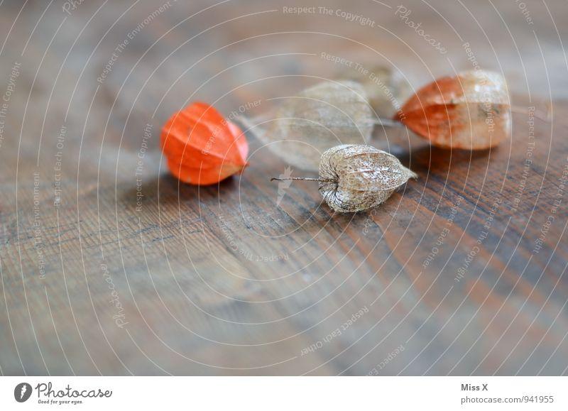 Physalis Frucht Herbst Blume Dekoration & Verzierung Kitsch Krimskrams Sammlung Holz verblüht dehydrieren trocken Verfall Vergänglichkeit Lampionblume