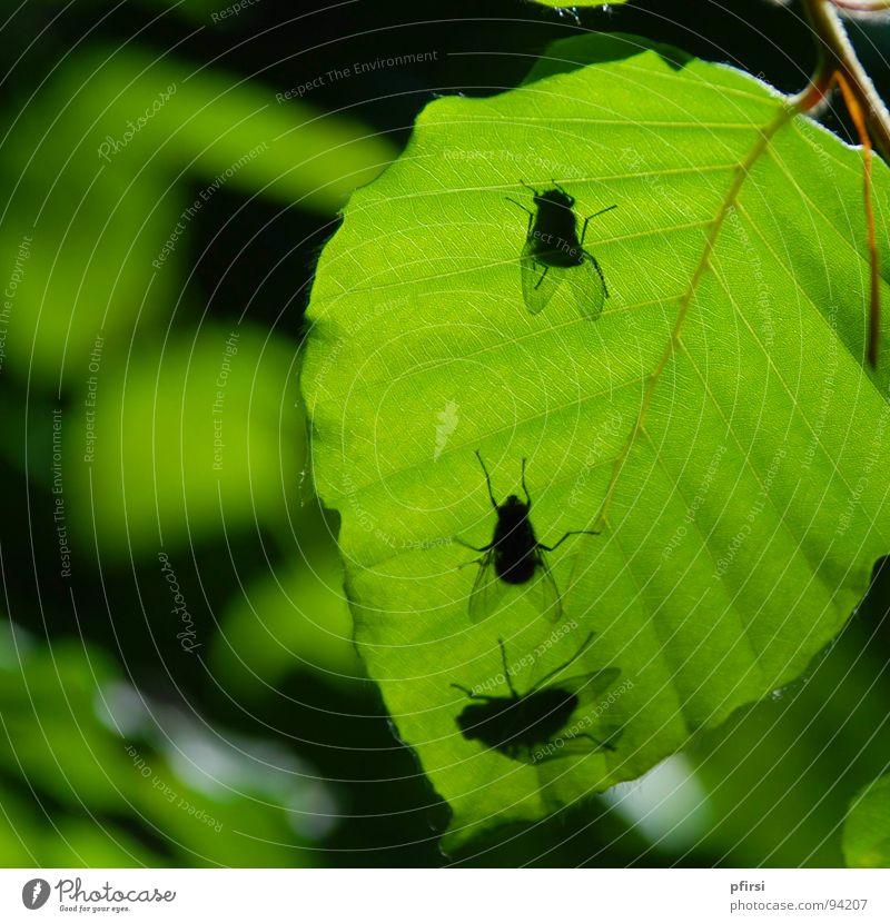 Schatten-Fliegen Blatt Baum grün Froschperspektive unten Tier Insekt 3 fliegen Natur oben