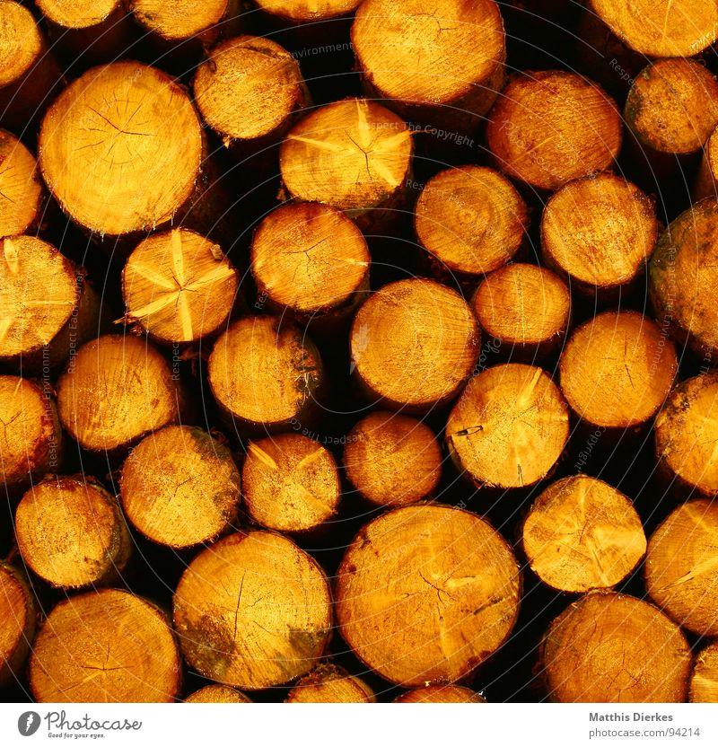 HOLZ Baum Holz rund gelb Haufen Stapel Holzstapel Baumstamm Abholzung Forstwirtschaft Kreis trocknen Rohstoffe & Kraftstoffe Außenaufnahme Muster Natur Fichte