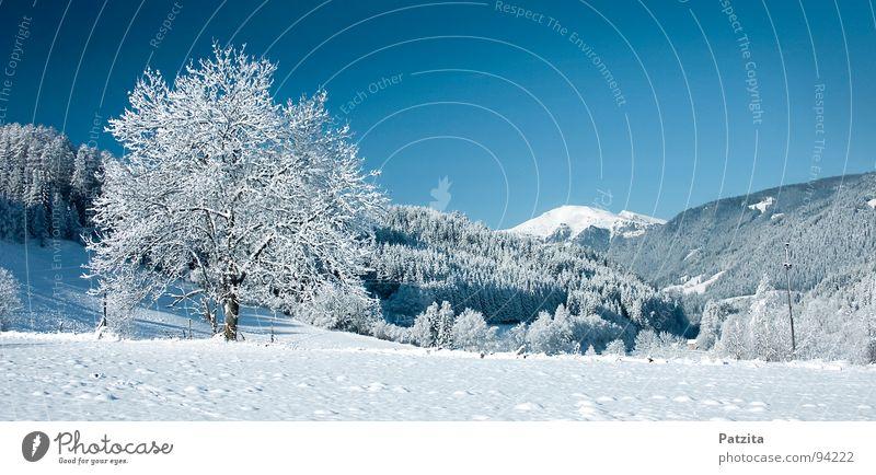 Traum in weiss und blau Winter Schneelandschaft Panorama (Aussicht) Baum Wiese Feld kalt gefroren Österreich Bundesland Kärnten Frieden Landschaft Himmel