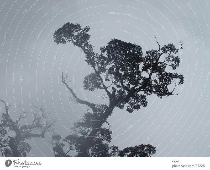 MISTY TREE schön Himmel Baum Wolken dunkel Herbst Gefühle Regen Stimmung Erde Kraft Nebel Energiewirtschaft berühren Urwald Geruch