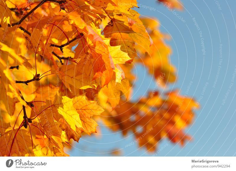 Himmel Natur Baum Wald Herbst Park Luft Klima Fröhlichkeit Urelemente Gelassenheit Klimawandel Tatkraft