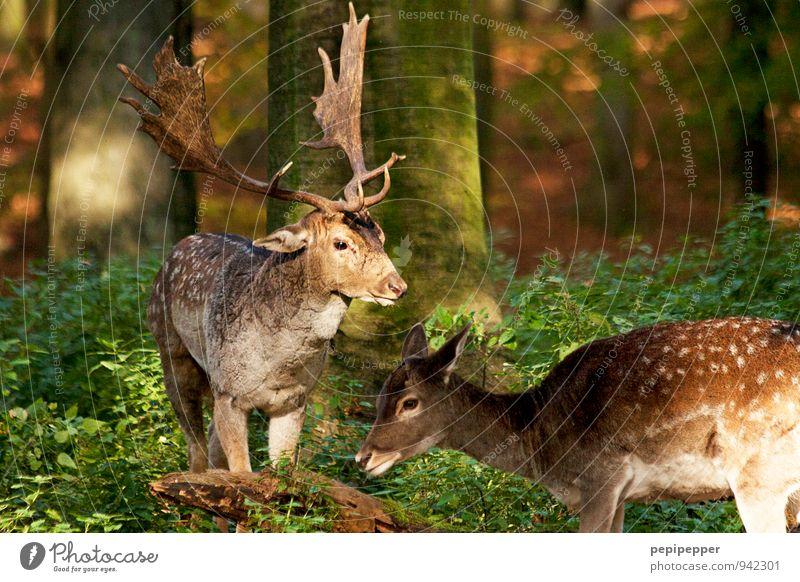 Y <Y Pflanze Tier Sommer Blume Gras Moos Wald Wildtier Tiergesicht Fell Hirsche Reh 2 Tierpaar braun grün Sicherheit Schutz ruhig mehrfarbig Außenaufnahme
