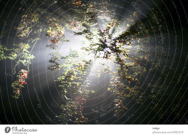 wenn Du denkst, es geht nicht mehr Natur Sonne Sonnenlicht Sommer Herbst Schönes Wetter Baum Wald leuchten hell natürlich schön grün schwarz weiß Gefühle