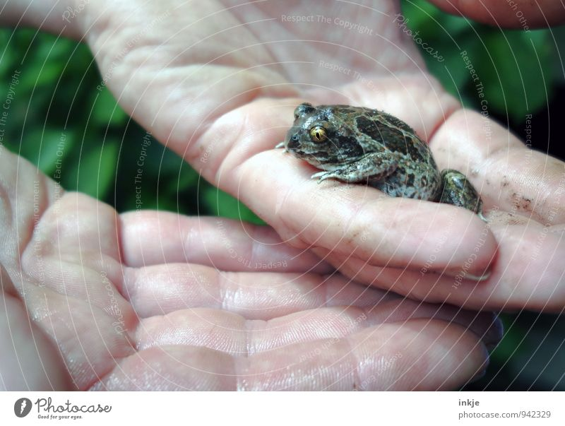 Findelkind Natur Hand Tier Gefühle natürlich klein Wildtier niedlich Schutz Neugier Bildung zeigen Fürsorge Frosch Interesse Vorsicht