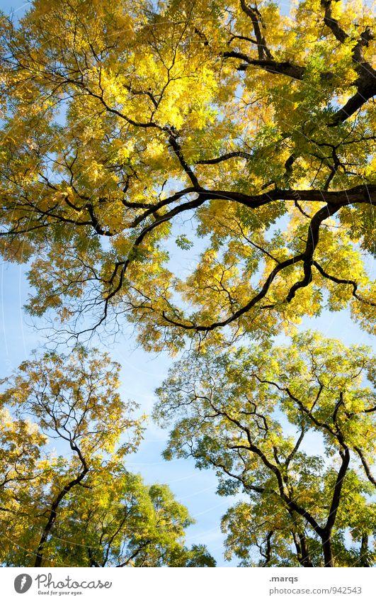 Überragend Ausflug Umwelt Natur Wolkenloser Himmel Herbst Schönes Wetter Baum Ast Laubbaum frei frisch natürlich schön blau gelb grün Erholung Baumkrone
