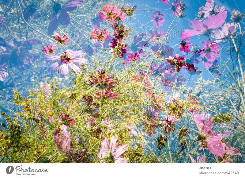 2200 | Sommerlich Lifestyle Stil Umwelt Natur Pflanze Wolkenloser Himmel Frühling Herbst Schönes Wetter Schmuckkörbchen Blumenwiese Blühend ästhetisch