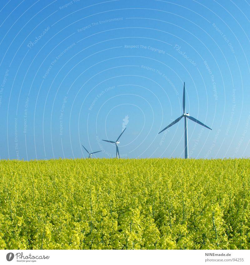 Brassica napus II Natur Himmel weiß Blume grün Sommer gelb Blüte Bewegung Frühling Feld Wind 3 Energiewirtschaft modern Erneuerbare Energie