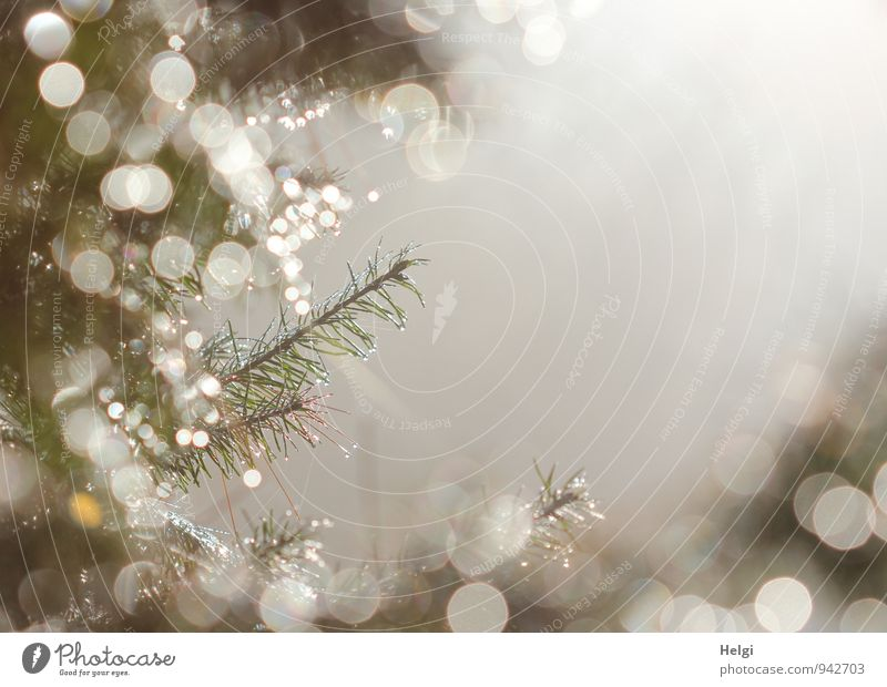 festliches Glitzern... Natur Pflanze schön grün weiß Baum ruhig Wald Umwelt natürlich grau außergewöhnlich Stimmung glänzend Nebel leuchten