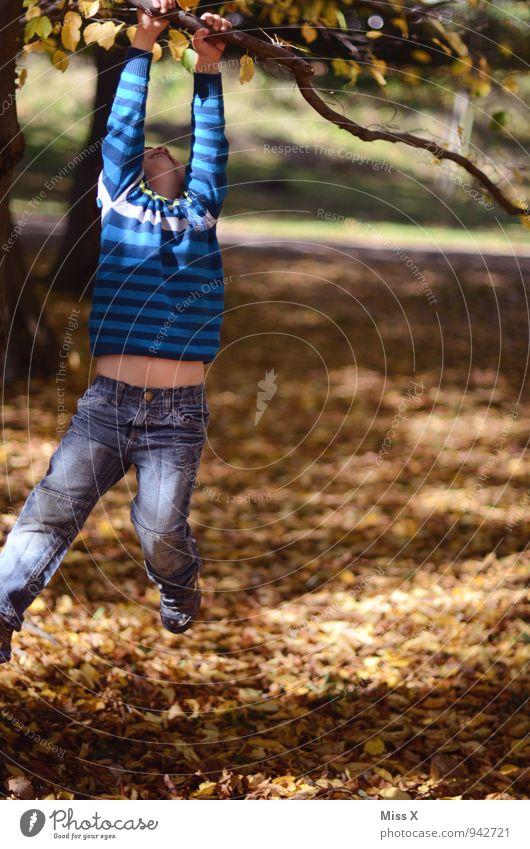 abhängen Mensch Kind Baum Freude Wald Herbst Gefühle Junge Spielen Stimmung Park maskulin Freizeit & Hobby Kindheit Ast Lebensfreude