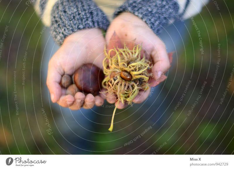 Fund im Park Mensch Kind Natur Hand Wald Umwelt Herbst Spielen Garten Lebensmittel Freizeit & Hobby Kindheit Finger Kleinkind Sammlung