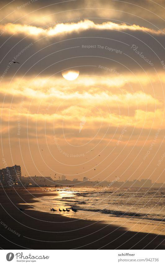 Belgisches Ende Landschaft Himmel Wolken Sonne Sonnenaufgang Sonnenuntergang Sonnenlicht Schönes Wetter Wellen Küste Strand Meer gelb gold orange rot schwarz