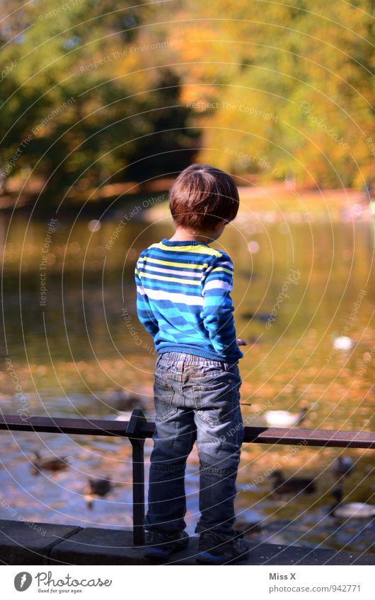 Kleiner Checker Spielen Ausflug Abenteuer Ferne Freiheit Mensch maskulin Kind Kleinkind Kindheit Leben Rücken 1 1-3 Jahre 3-8 Jahre Herbst Park Küste Teich