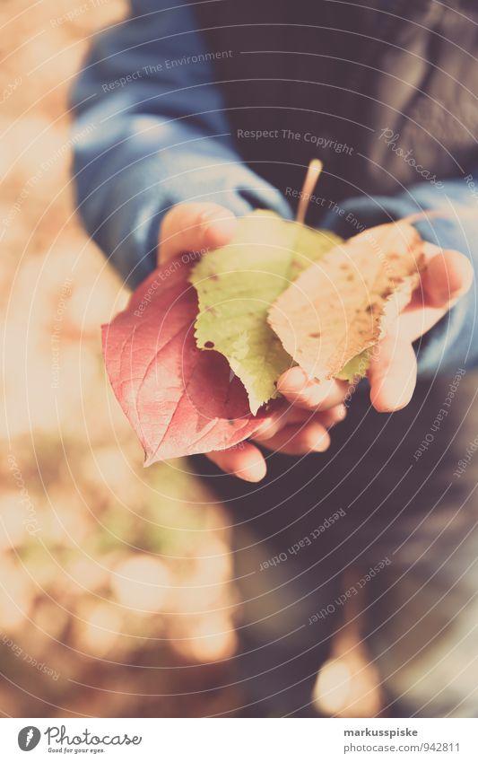 herbst in der kita Mensch Kind Stadt Pflanze Baum Hand Blatt Freude Herbst Spielen Glück Garten maskulin Freizeit & Hobby Kindheit Arme