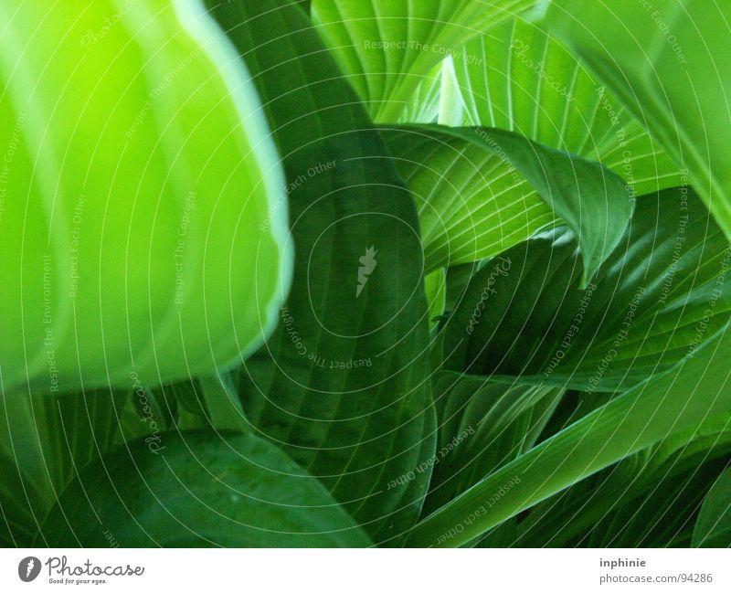 Blätterwerk Natur grün Pflanze Urwald