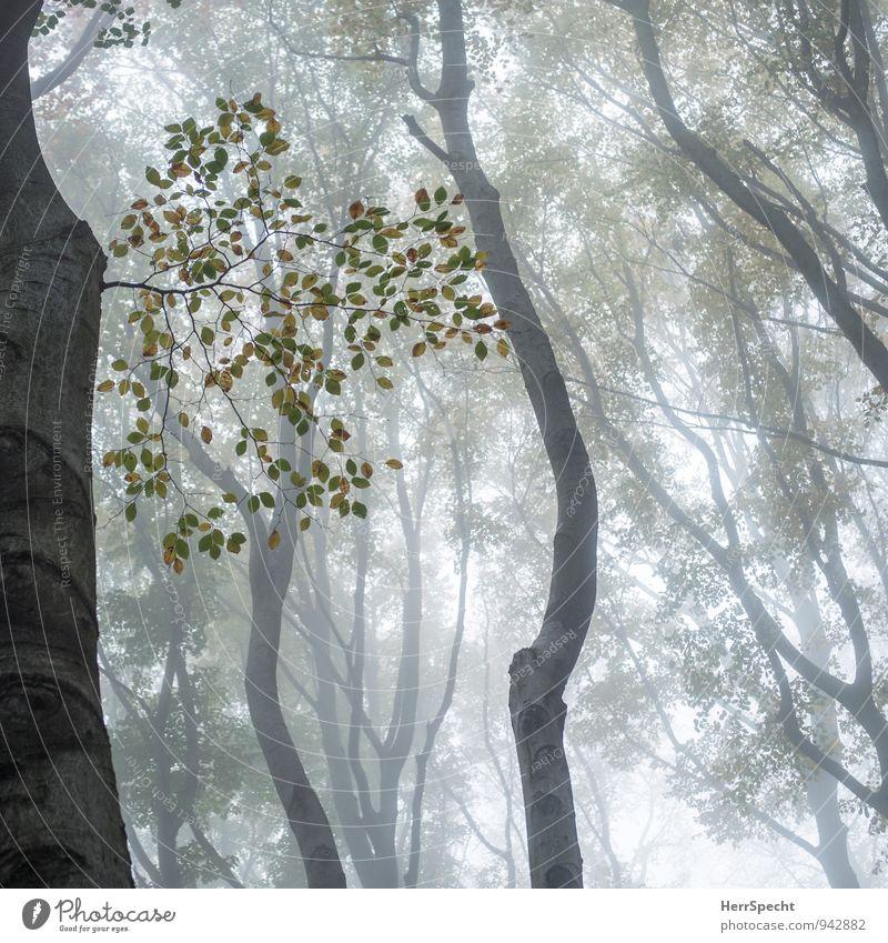 Nebelwald V Natur grün Baum Wald Umwelt Herbst natürlich grau braun gruselig herbstlich mystisch Wien schlechtes Wetter Herbstfärbung