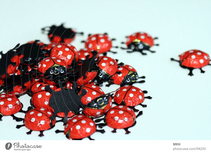 Käfer Banging weiß rot schwarz Beine Ostern Insekt Punkt Süßwaren Schokolade Anhäufung Marienkäfer Haufen Vollmilch
