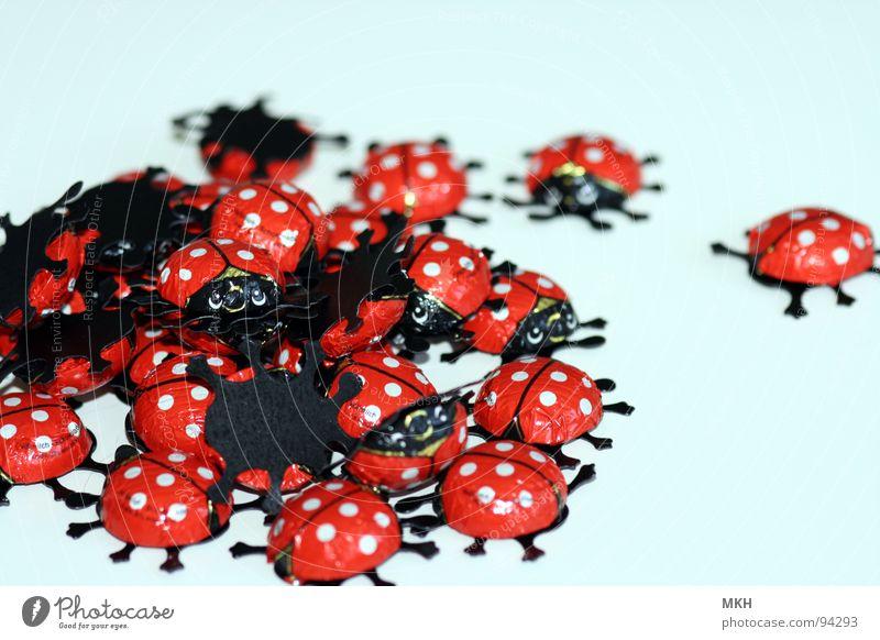 Käfer Banging weiß rot schwarz Beine Ostern Insekt Punkt Süßwaren Schokolade Anhäufung Käfer Marienkäfer Haufen Vollmilch