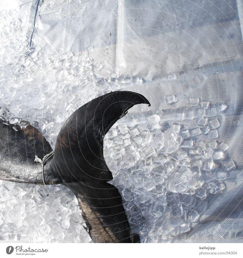 sing mir das lied vom tod Tier Tod Eis Fisch verfaulen Lebewesen Fischereiwirtschaft töten sinnlos Schwanzflosse