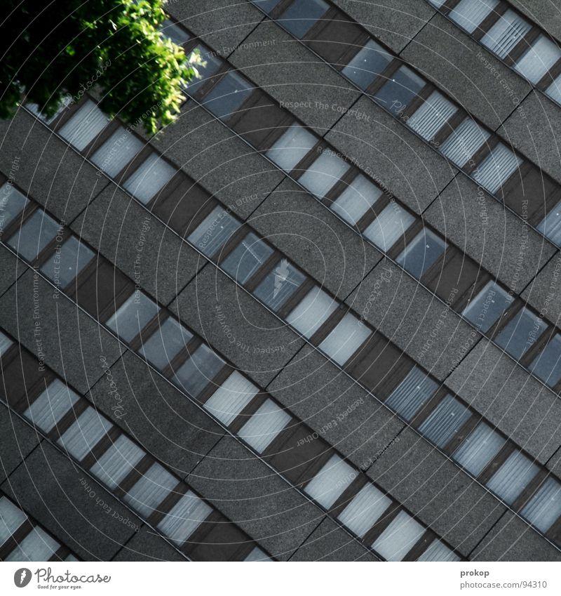 Oase in B. Haus Fenster Fensterfront Baum grün grau Kreuzberg Muster Gebäude Hochhaus trist Wand diagonal quer Blatt Stadt Park Detailaufnahme Trauer