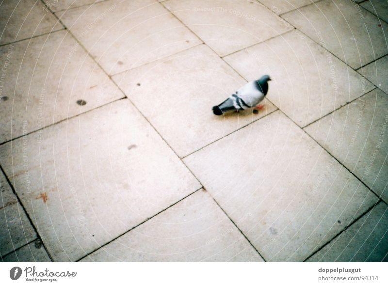 Allein auf weiter Flur Taube Bürgersteig Tier Vogel Steinplatten grau Einsamkeit Stadt Beton Lomografie