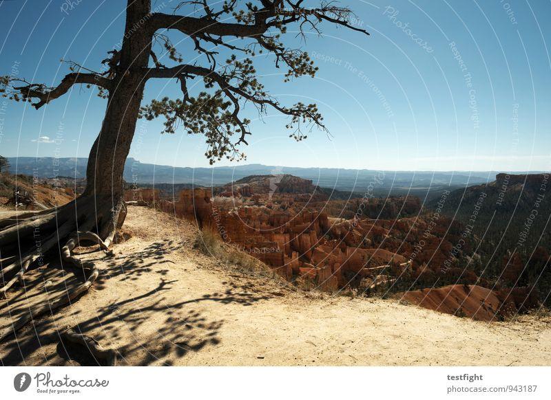 baum Umwelt Natur Baum Schlucht Bryce Canyon National Park gigantisch wild Höhenangst Abenteuer Naturerlebnis Naturwunder Farbfoto Außenaufnahme Licht Schatten