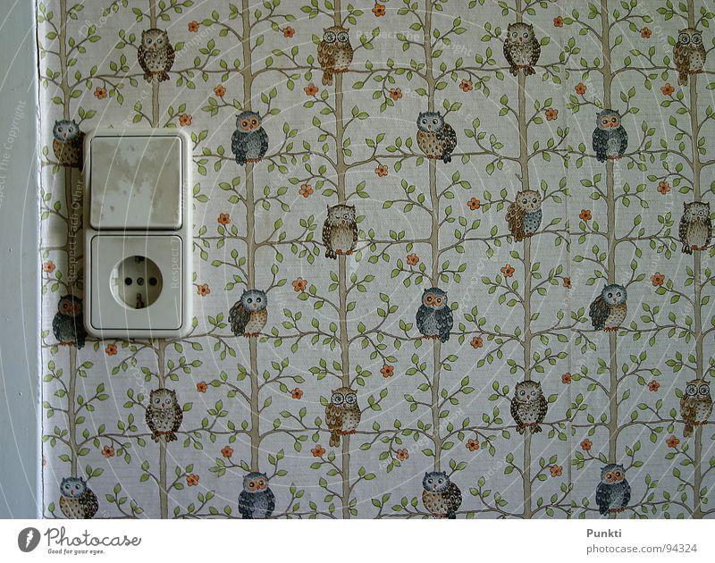 Tapeteeeeeeeeee mit Eulen alt Tapete Vogel altehrwürdig Steckdose früher Kinderzimmer Eulenvögel Lichtschalter