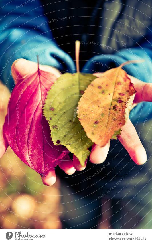 herbst in der kita Mensch Kind Pflanze Farbe Baum Hand Blatt Freude Glück Garten Park maskulin Freizeit & Hobby Kindheit Arme beobachten