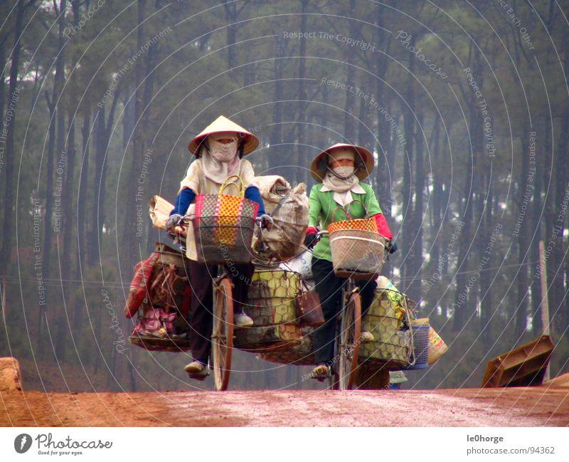 heavy transportation Frau Straße Wald Arbeit & Erwerbstätigkeit Fahrrad fahren Güterverkehr & Logistik Asien Dienstleistungsgewerbe schwer Vietnam