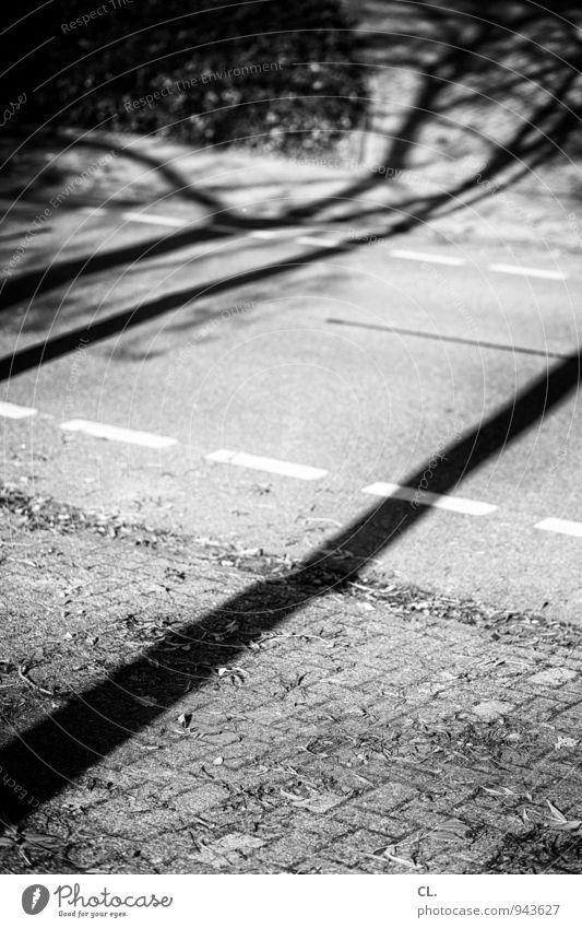 schatten Umwelt Natur Herbst Schönes Wetter Baum Verkehr Verkehrswege Straßenverkehr Wege & Pfade Fahrradweg Linie Schwarzweißfoto Außenaufnahme Menschenleer