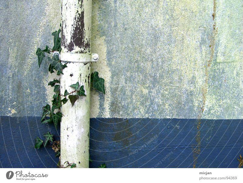 AbflussrohrLove Efeu Pflanze grün weiß Mauer Wand gemalt Wachstum Linearität graphisch gezeichnet Stengel Blatt Strukturen & Formen Platz Haus Gebäude Eisenrohr