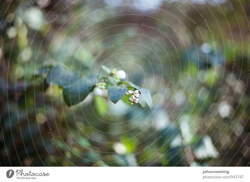 nur noch sekunden. Umwelt Natur Pflanze Herbst Sträucher Grünpflanze Wildpflanze Garten Park Wiese Wald ästhetisch außergewöhnlich schön einzigartig weich grün