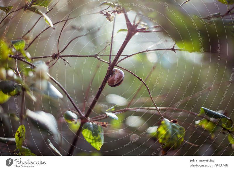 im schneckenhaus Natur Pflanze grün Sonne Landschaft Tier ruhig Wald Umwelt Herbst Gesundheit Garten braun Park Zufriedenheit frisch