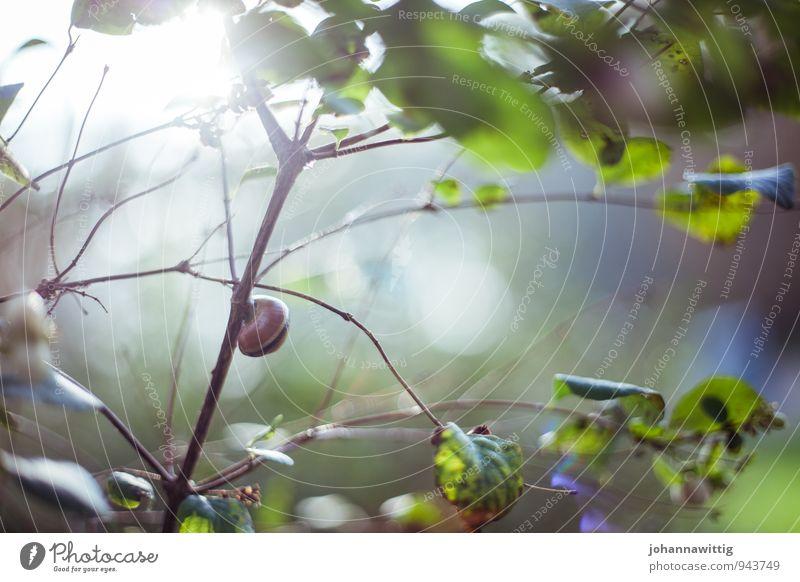 im schneckenhaus Umwelt Natur Landschaft Pflanze Tier Sonne Sonnenlicht Sommer Schönes Wetter Baum Sträucher Blatt Grünpflanze Wildpflanze Schnecke rennen