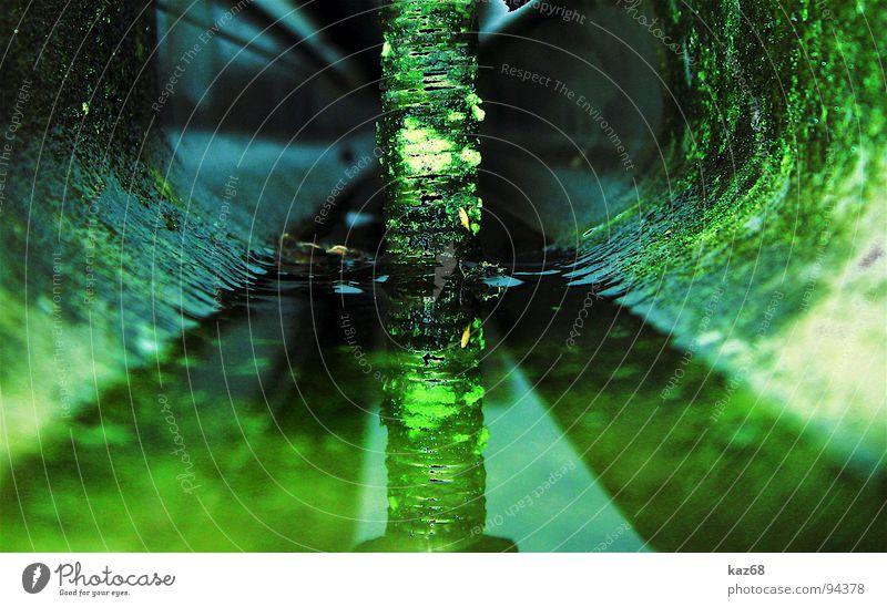 es grünt so grün Regenrinne Wasserstand Schraube verfallen Wasserrinne Spiegel Reflexion & Spiegelung Haus Herbst kaputt Reparatur rund Pfütze bewachsen