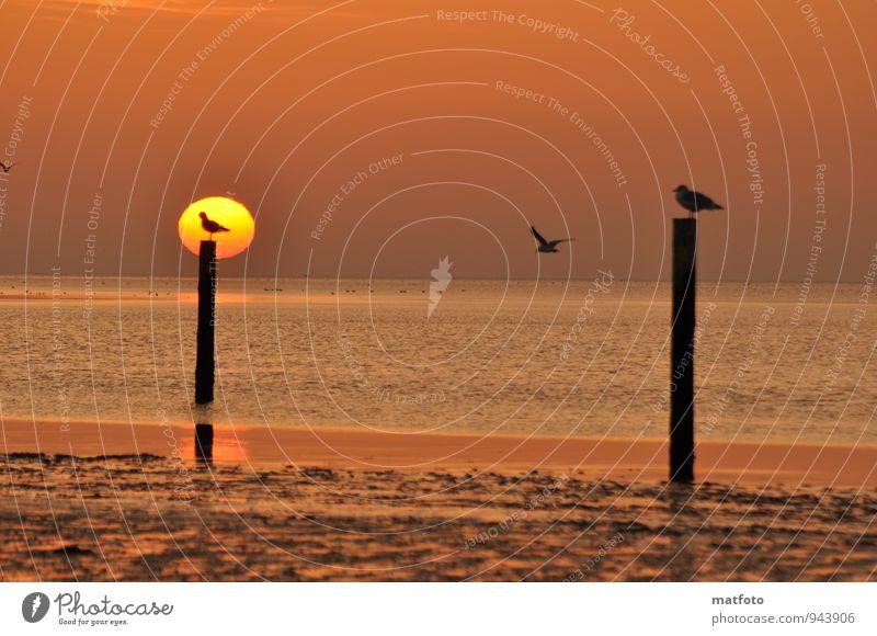 Warten auf ein freien Platz. Ferien & Urlaub & Reisen Strand Meer Sonnenaufgang Sonnenuntergang Küste Nordsee Tier Vogel Möwe 3 Sand Holz Wasser Holzpfahl