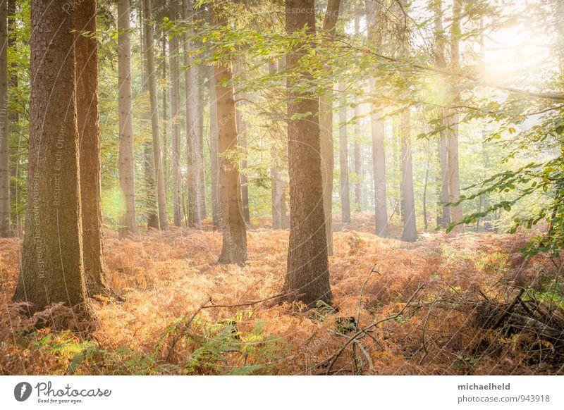 Goldener Herbst Landschaft Sonne Sonnenaufgang Sonnenuntergang Sonnenlicht Baum Farn Wald Denken Lächeln Liebe träumen positiv schön Wärme Gefühle
