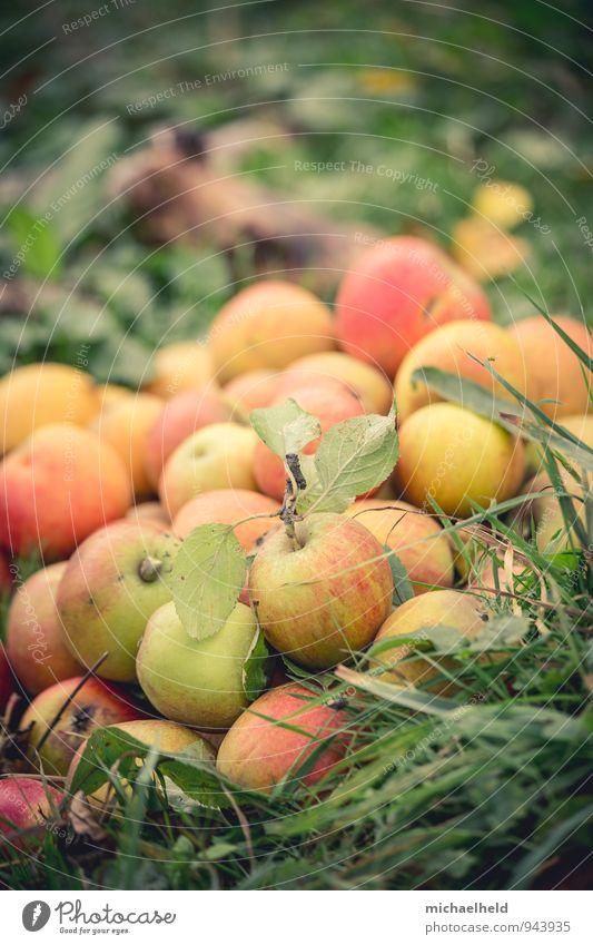 Apfelernte 1 Lebensmittel Frucht Ernährung Bioprodukte Vegetarische Ernährung Natur Herbst Nutzpflanze Garten frisch Gesundheit Idylle nachhaltig Tradition