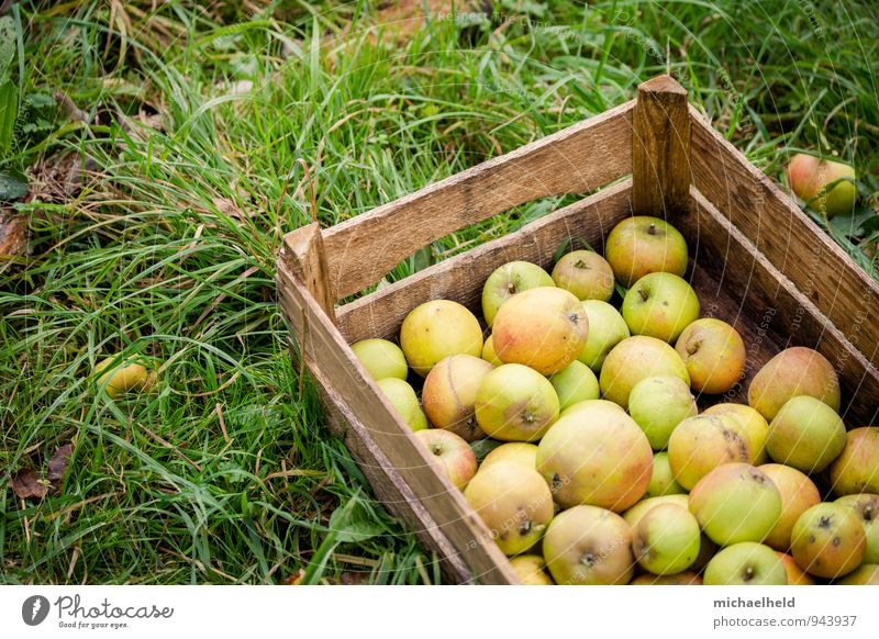 Apfelernte 2 Lebensmittel Frucht Bioprodukte Vegetarische Ernährung Diät Fasten Gesundheit nachhaltig natürlich genießen Apfelkiste Obstbau Gesunde Ernährung
