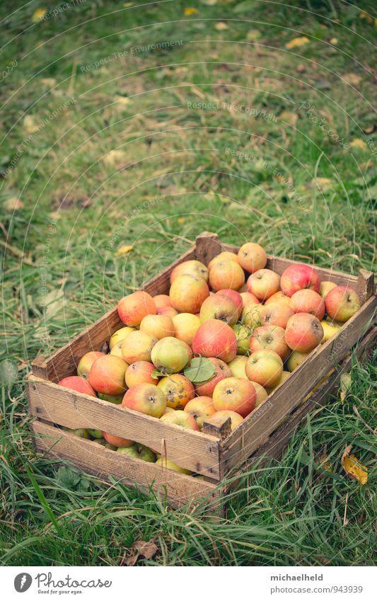Apfelernte 3 Frucht Ernährung Bioprodukte Vegetarische Ernährung Diät Fasten Gesundheit natürlich nachhaltig Apfelkiste Holsteiner Cox Cox Orange