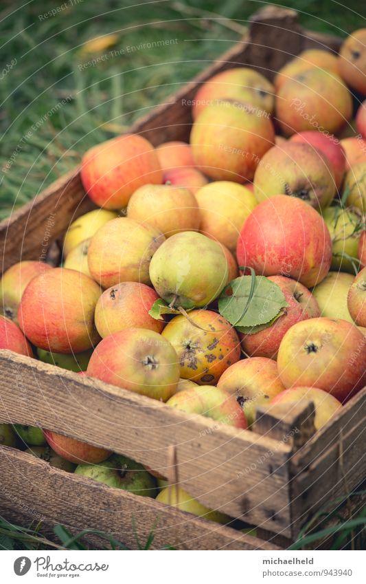 Apfelernte 4 Frucht Bioprodukte Vegetarische Ernährung Diät Fasten Gesundheit Apfelkiste Gesunde Ernährung Holsteiner Cox Cox Orange Farbfoto Außenaufnahme